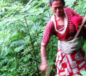 ortica-nepal-allo-malalbergo